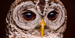 photo of owl eyes